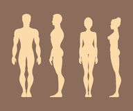 Silhouettes of men and women. Anatomy. Vector Illustration Royalty Free Stock Photo
