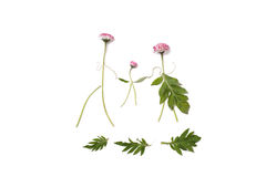Silhouettes of men, women and children from the field of bright pink flowers on an isolated background. Royalty Free Stock Images