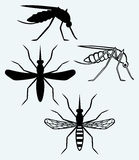 Silhouettes of mosquito Stock Images