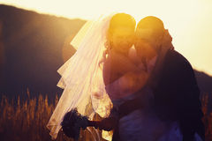 The silhouettes of newlyweds standing on the field in the sunny Royalty Free Stock Images