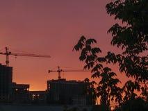 Silhouettes noires d'arbre avec des feuilles et bâtiments en construction avec des grues à tour sur un fond de ciel rouge-orange  image libre de droits