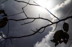 Silhouettes noires de feuilles, silhouette de branches Image stock