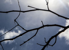 Silhouettes noires de feuilles, silhouette de branches Images stock
