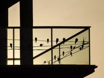 Silhouettes a number of birds Royalty Free Stock Photos