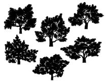 Silhouettes of oak trees with leaves. Royalty Free Stock Image