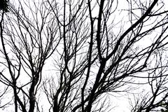 Silhouettes Of Branches Stock Photo
