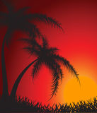 Silhouettes Of Palm Trees Against A Decline Stock Photos