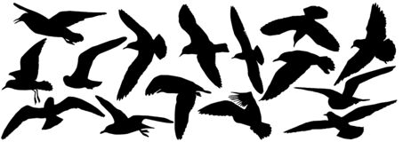 Free Silhouettes Of Seagull Birds, Set. Vector Illustration Royalty Free Stock Images - 183604569