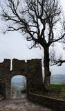 Silhouettes of old gate and bare tree Royalty Free Stock Photo