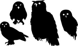 Silhouettes of owls. (eurasian eagle-owl, snowy owl, horned owl Royalty Free Stock Images