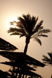The silhouettes of palm Stock Photos