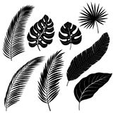 Silhouettes of Palm Leafs Royalty Free Stock Photo