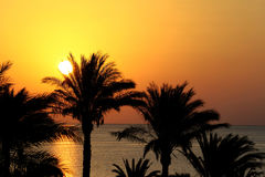 Silhouettes of palm trees above the sea and rising sun Stock Photo