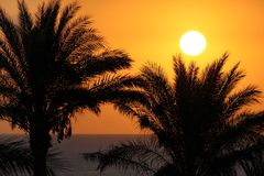 Silhouettes of palm trees above the sea and sun Stock Image