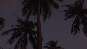Silhouettes of palm trees against the background of a stormy sky. Maldives video. Horizontal stock video