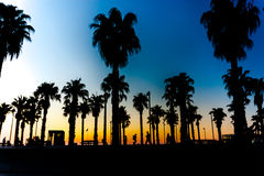 Silhouettes of palm trees against a beautiful sunset with people Stock Photos