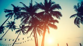 Silhouettes of palm trees against the sky on the sea beach Stock Image
