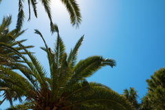 Silhouettes of palm trees against the sky during a tropical day Royalty Free Stock Photography