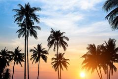Silhouettes of palm trees against the sky during a tropical sunset. Nature. Stock Photos