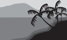 Silhouettes of palm trees in beach Stock Photo