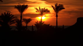 Silhouettes of palm trees on the beach at dawn stock video