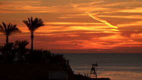 Silhouettes of palm trees on the beach before sunrise stock video footage