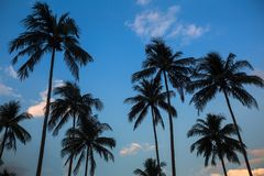 Silhouettes of palm trees on a blue sky. Royalty Free Stock Photos