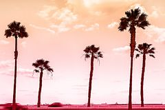From Dusk till Dawn. Silhouettes of Palm Trees and Coloful Sky Background on the Sea royalty free stock images