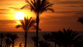 Silhouettes of palm trees at dawn. In the background you can see the sea with the reflection of the sun stock video