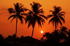 The silhouettes of Palm trees at dawn stock image