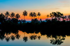Silhouettes of palm trees at dawn. Near a lake Royalty Free Stock Image