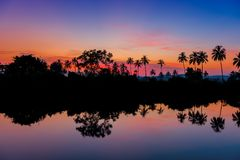 Silhouettes of palm trees at dawn near a lake. Stock Image