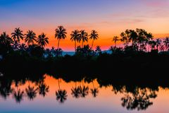 Silhouettes of palm trees at dawn near a lake. Stock Photos
