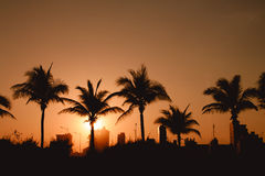 Silhouettes of Palm trees and houses Royalty Free Stock Image