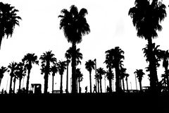 Silhouettes of palm trees  with people in black and white. Royalty Free Stock Photography