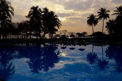 Silhouettes of palm trees and pool on sunset Stock Photos