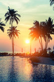 Silhouettes of palm trees on the sea beach Royalty Free Stock Photo