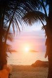 Silhouettes of palm trees on the sea beach Stock Photos