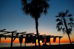 Silhouettes of palm trees by the sea on a sunset background. Beach. Of Abkhazia Royalty Free Stock Image