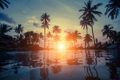 Silhouettes of palm trees on the sea tropical beach. Silhouettes of palm trees on the sea tropical beach during an amazing sunset Royalty Free Stock Photos