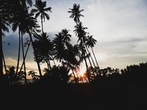 Silhouettes of Palm Trees During Sunset Stock Images
