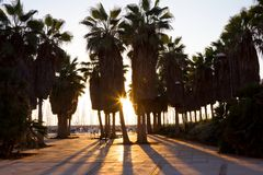 The silhouettes of Palm trees at sunset Royalty Free Stock Images