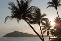 Silhouettes of palm trees at sunset Stock Photos