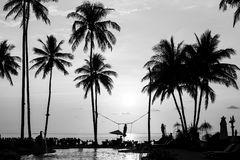 Silhouettes of palm trees on a tropical beach Royalty Free Stock Image
