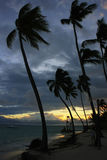Silhouettes of palm trees on a tropical beach Stock Image