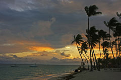 Silhouettes of palm trees on a tropical beach Stock Photos