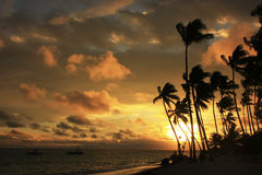 Silhouettes of palm trees on a tropical beach Royalty Free Stock Photos