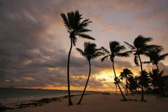 Silhouettes of palm trees on a tropical beach. At sunrise Stock Image