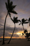 Silhouettes of palm trees on a tropical beach. At sunrise Stock Photography