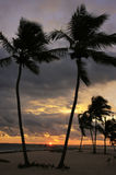 Silhouettes of palm trees on a tropical beach. At sunrise Royalty Free Stock Photography
